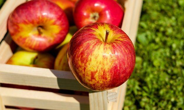 Apple and Peach Chutney Turkey Pattie