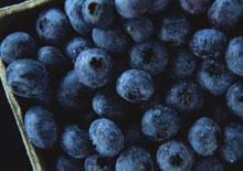 Blueberries in Winter